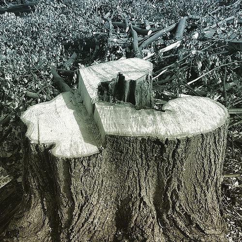 Woodmanship