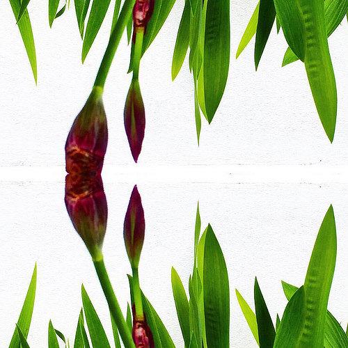 Irisesiri